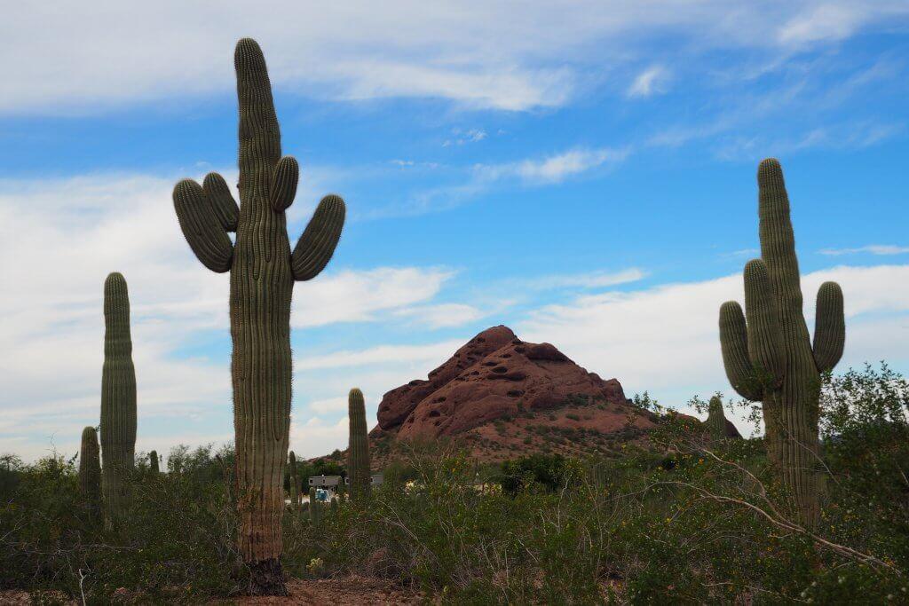 Cactus Clay desert