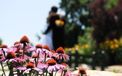 Our Frugal Wedding