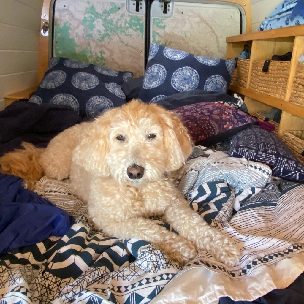 bed campervan dog