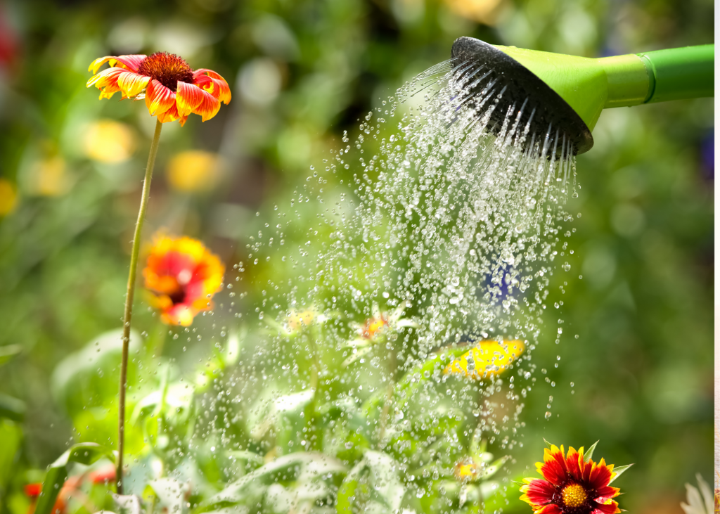 water flowers cashflow